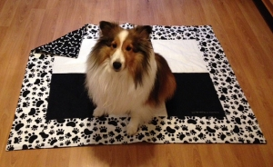Salsa-Lassie Jr