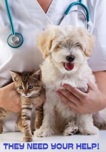 bigstock-Little-dog-and-cat-at-the-vete-41372266