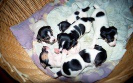 Maggie & her siblings - January 1999